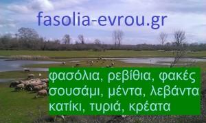 fasolia_evrou_logo1